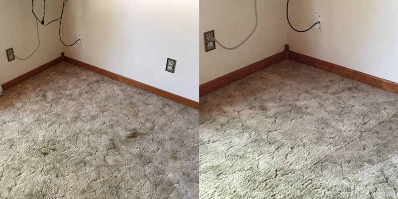 Pet Stain: Before & After